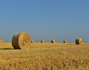 Ohio State Extension Holding Hay Quality, Beef Update
